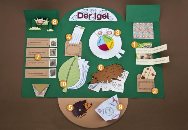 Projektplan lapbook igel f r kindergarten kita und schule - Vatertagsgeschenke kindergarten ...