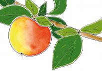Apfellied für Erntedank