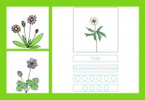 Spring Flowers 2 - Syllable games - Picture cards