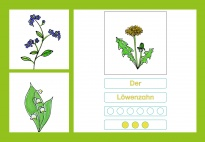 Spring Flowers 1 - Syllable games - Picture cards