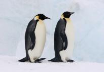 Der Pinguin: Ein Steckbrief mit Foto für Kinder