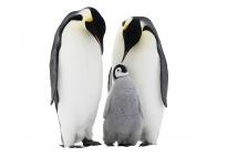Der Pinguin: Interessantes für alle, die mehr wissen wollen