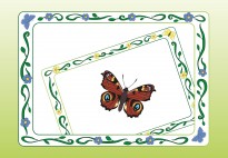 Portfolio Page: My Butterfly Picture