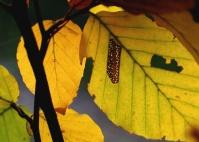 Autunno - foglie