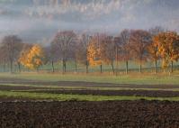 Fall - Trees