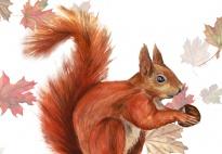 Eine Eichhörnchen - Massagegeschichte
