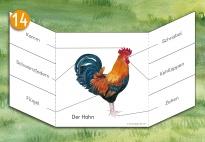 Flip-Flap: Der Hahn