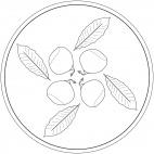 Mandala con frutta: castagna