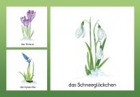 Frühling komm herbei - Bildkarten