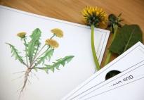 Die Pflanzenteile des Löwenzahns - Spielideen