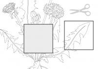 Die Pflanzenteile des Löwenzahns - Löwenzahnbild ergänzen SW
