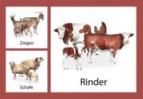 Aktionskarten: Tierfamilien am Bauernhof