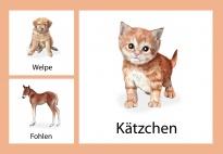 Aktionskarten: Tierkinder am Bauernhof