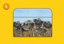 Mini-Lapbook Sonnenblume: Falttasche 1
