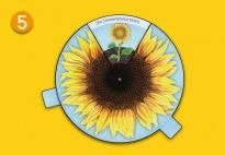 Mini-Lapbook Sonnenblume: Drehrad