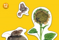 Mini-Lapbook Sonnenblume: Dekoration