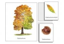 Laubbäume im Herbst-ein Klebebild