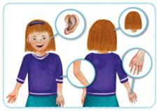 Körper kennenlernen kindergarten