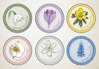Spring Flowers Memo Game - Round Picture Cards