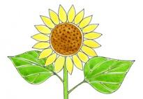 Sonnenblumen Lied